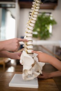 Cropped hands of female therapist and boy pointing at artificial spine